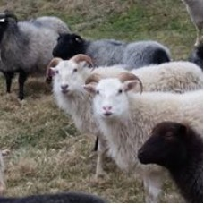 Hudson Valley Sheep and Wool Company