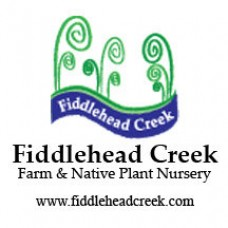 Fiddlehead Creek