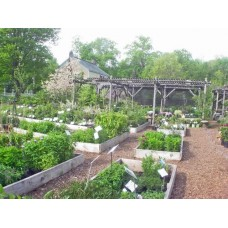 Catskill Native Nursery